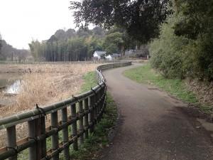 谷の家までの竹林
