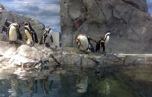 ペンギンアザラシゾーン
