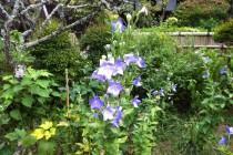 瑞泉寺 庭園2