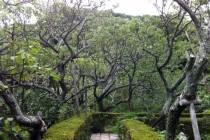 瑞泉寺 庭園3