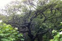 瑞泉寺 庭園4