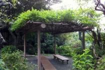 瑞泉寺 庭園5