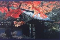 紅葉時期の瑞泉寺